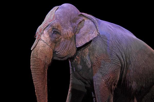 elefante circo dismissione animali