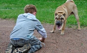 bambino cane animale