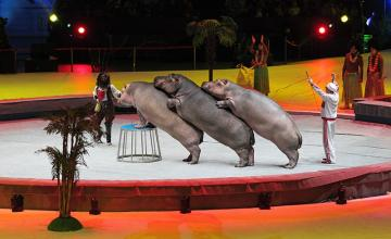 altea spagna bambini vietano circo animali